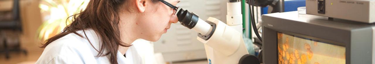 Frau im Labor prüft über ein Mikroskop die Qualität der PICK original ungarischen Salami.